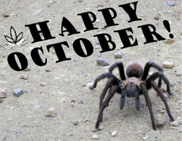 OCT spider